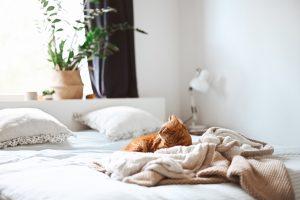 Cómo elegir el colchón perfecto